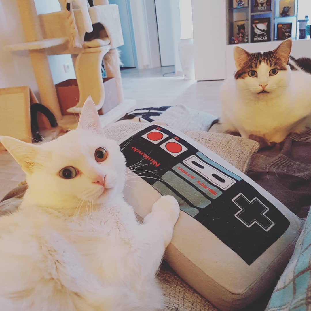Nintendoomed Instagram